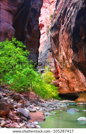 Steep vertical cliffs rise from the Virgin River in The Narrows of Zion National Park