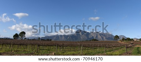 Stellenbosch wine region of South Africa