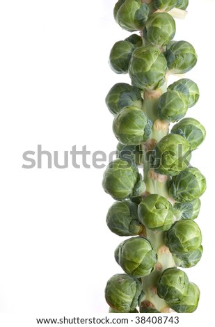 Stem or head of uncooked brussel sprouts in their natural state isolated on white background