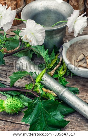 Stems of herbaceous medicinal plants genus Datura Nightshade family with poppy seeds on the background mortar with pestle.Selective focus
