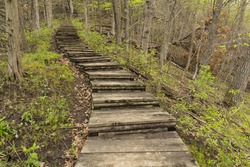 Step Trail In Woods During Spring