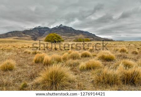 Steppe in patagonia, Argentina ストックフォト ©