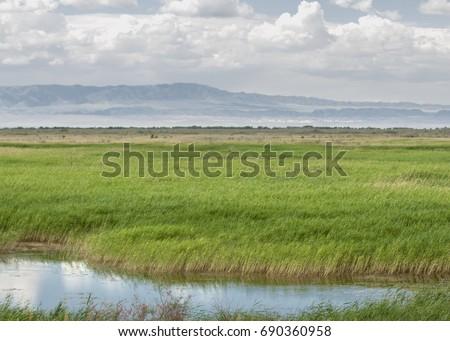 steppe, prairie, veld, veldt. synonyms: plains, grasslands. open, uncultivated country or grassland. Altyn Emel National Park #690360958
