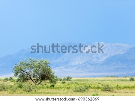 steppe, prairie, veld, veldt. synonyms: plains, grasslands. open, uncultivated country or grassland #690362869