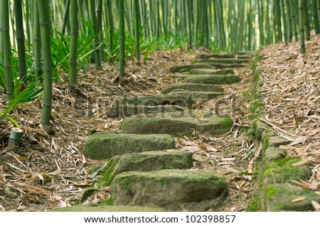 Stepping Stones in Bamboo Forest