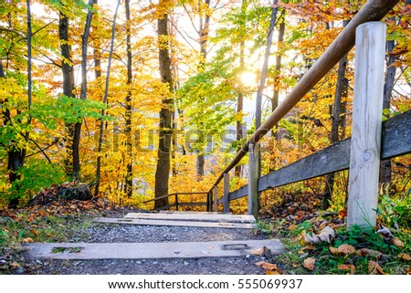 steps at a footpath in a forest - Shutterstock ID 555069937