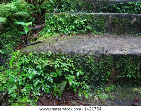 Steps in El Yunque Rainforest