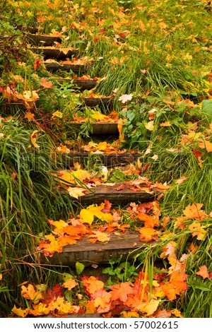 steps into autumn