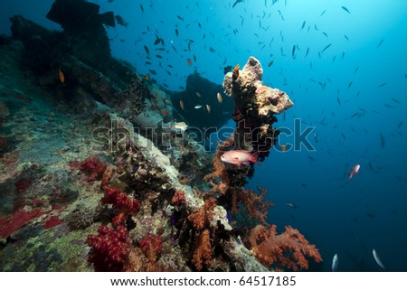 Stern of the Thistlegorm wreck. #64517185