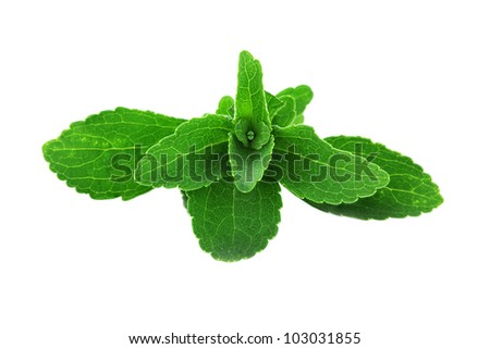 Stevia leaves isolated on a white background with clipping path included. Shallow depth of field with selective focus on center leaves.
