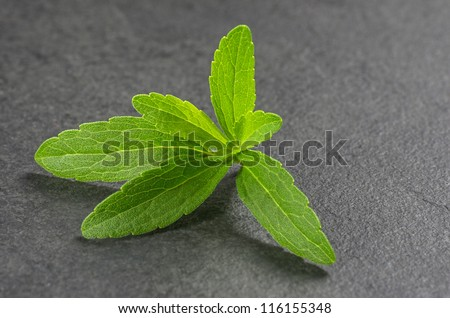 Stevia leaves on a slate plate
