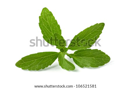 stevia leaves on a white background