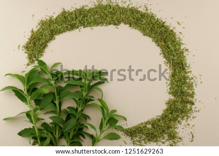 Stevia plant.Stevia rebaudiana, sweetener herb. vegetable sweetener.sprigs of stevia and dry powdered stevia  on beige background.