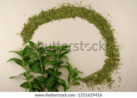 Stevia plant.Stevia rebaudiana, sweetener herb. vegetable sweetener.sprigs of stevia and dry  stevia  on beige background.