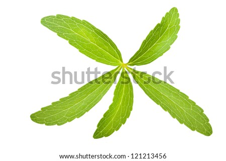 stevia rebaudiana branch isolated on white