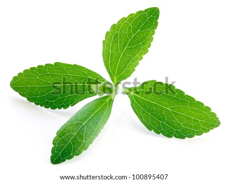 Stevia rebaudiana, sweetleaf sugar substitute isolated on white background