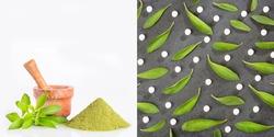 Stevia rebaudiana with health benefits - Natural sweetener