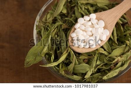 Stevia, sweetener - Stevia rebaudiana