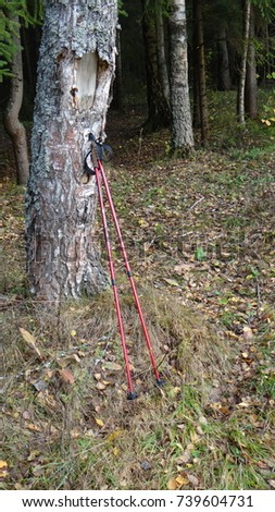 Stick for Nordic walking. #739604731