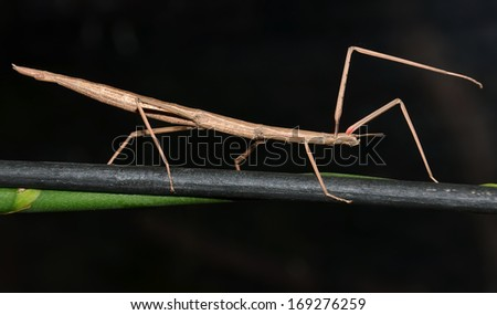 stick insect walking on the stem #169276259