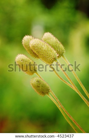 Sticking out - stock photo