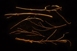 Sticks isolated on Black Background. Pile of Kindling and Dry Leaves. Dry Tree Branch Collection. Top View and Close Up Macro View with Text Space