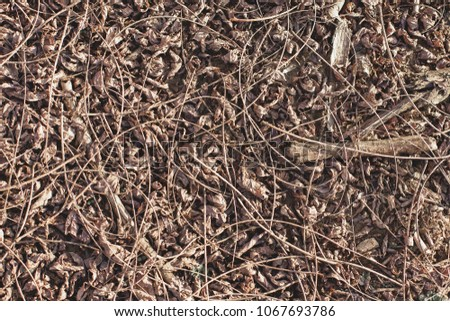 Sticks on the ground, Dry branches, Branches, Texture from branches #1067693786