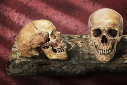 Still life art manipulated on death concept with skulls on floating marble table