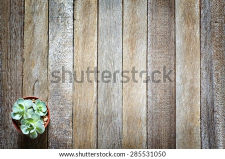 Still Life Beautiful Natural Cactus Rose Plant  on Vintage Old Wood Background Texture Edge Darken Style