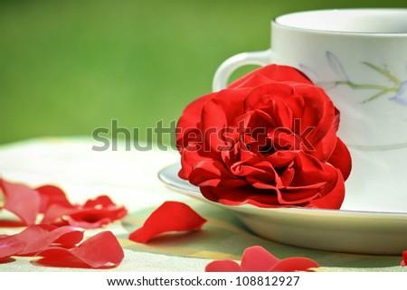 Still Life Circle and the Rose