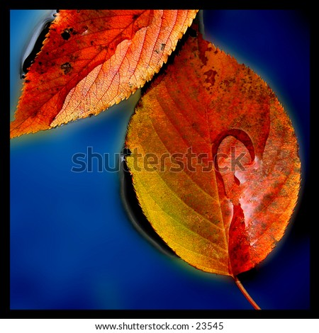 Still life composition of autumn leaves in blue water.