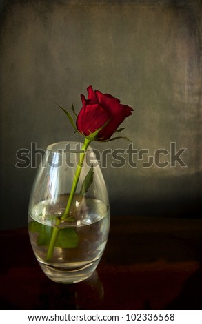 Still life in chiaroscuro, a single red rose in a glass vase with reflections
