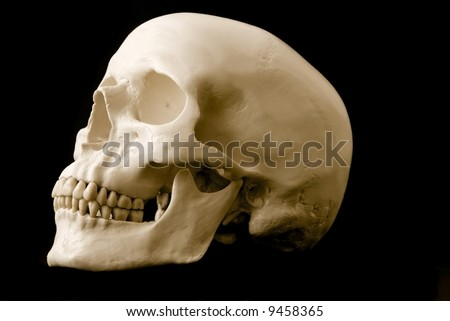 still life of a human skull over a black background
