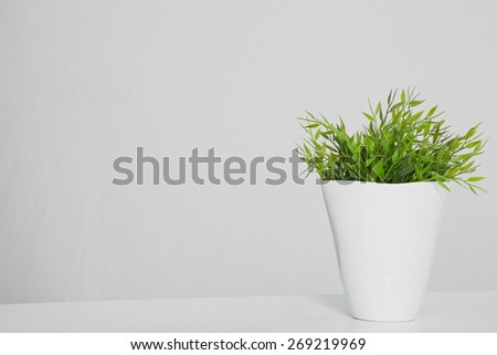 Still Life of Green Potted Plant in White Planter on Table with Copy Space - Shutterstock ID 269219969