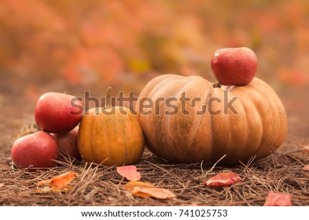 Still life of harvest fruit and vegetables. A composition of pumpkins, pears and red apples with basket in the autumn orange forest.