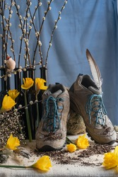 Still Life of hiking boots on a natural burlap platform sprinkled with dirt also Daffodil flowers, Pussy willows, tall dark narrow bottles, a feather, a bird with a blue draped background