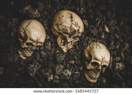 Still life of human skull that died for a long time was buried in the ground and was discovered by excavations Foto stock ©
