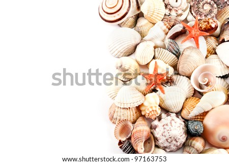 Still life of little seashells on a white background.