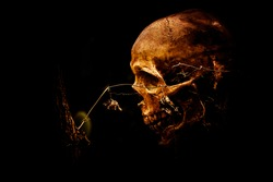 still life of skull and flowers on dried wood