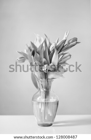 Still life photograph of fresh tulips