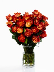 Still life photography of open orange-red roses cut flowers floral arrangement in a glass vase on white background