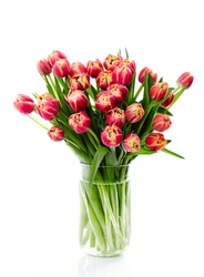 Still life photography of red tulips with yellow edging in a glass vase, flowers floral arrangement on white background