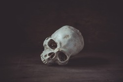 Still life photography with human skull on wood table