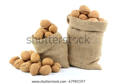 Still life picture of Unshelled Walnuts Nuts with shells in burlap bags and spilled on pile over white background.