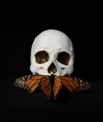 still life portrait of a skull  with a monarch butterfly, against a black background.