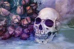 still life skull with a bouquet of roses in light smoke