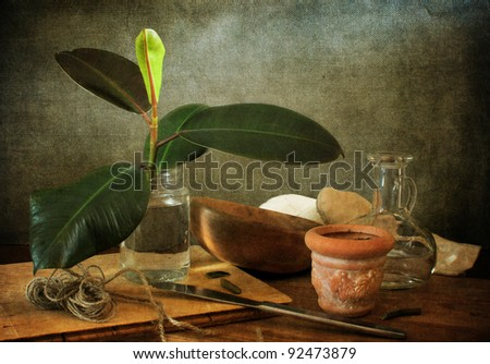 Still life with a ficus