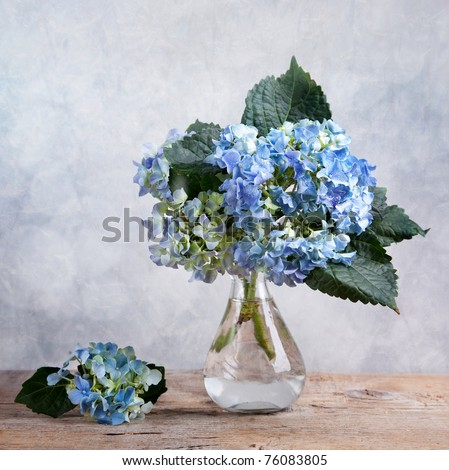 Still-Life with blue Hortensia Flowers in glass vase