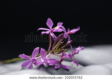Still life with bouquet of orchid flowers with pebbles