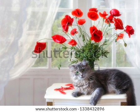 Still life with bouquet of poppies and funny kitty